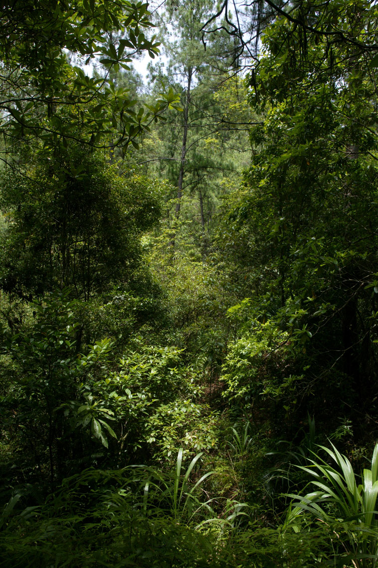 Belize-Hidden-Valley-C07S0836_1359